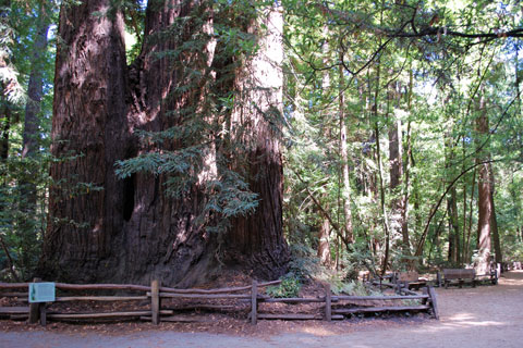 Henry Cowell Redwoods State Park Campground on