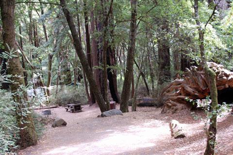 Huckleberry C&ground & Huckleberry Campground - Big Basin Redwoods State Park