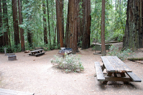 group campground at Portola Redwoods State Park, CA
