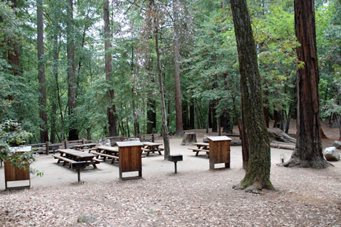 Image result for pictures of big basin redwoods state park campground