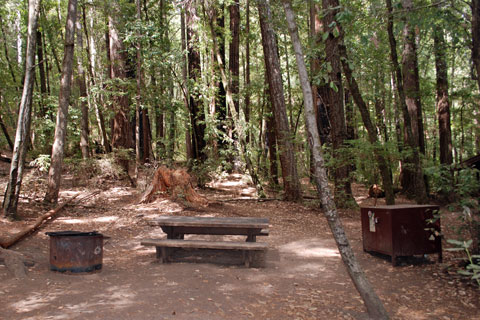 Wastahi Walkin Campground Big Basin Redwoods State Park